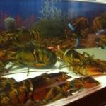 lobster-tank1
