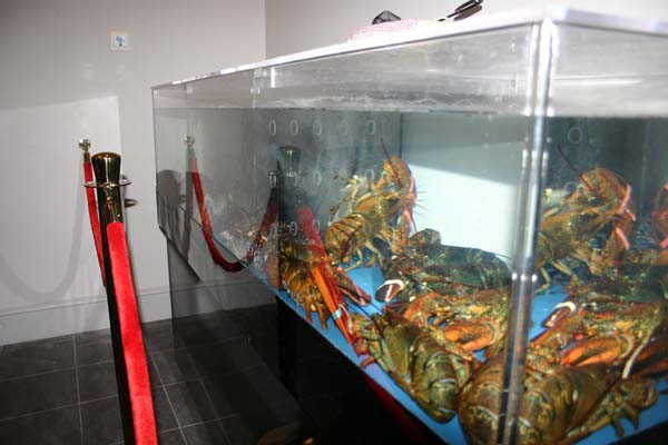 Lobster Tank Guide | TradeWind Chillers